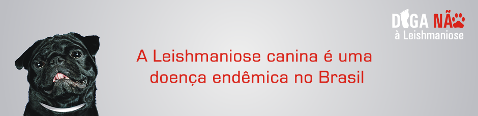 leishmaniose-canina